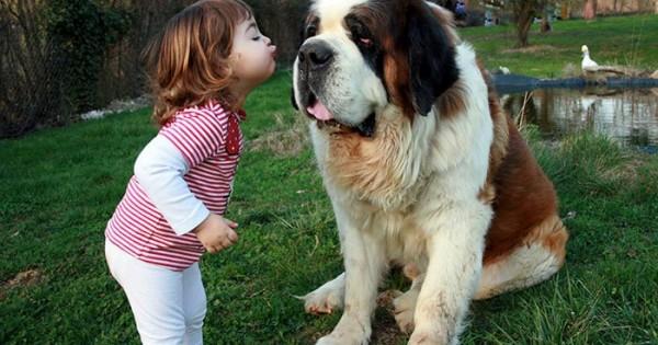12 καρέ που αποδεικνύουν γιατί ένας σκύλος είναι η καλύτερη νταντά (pics)