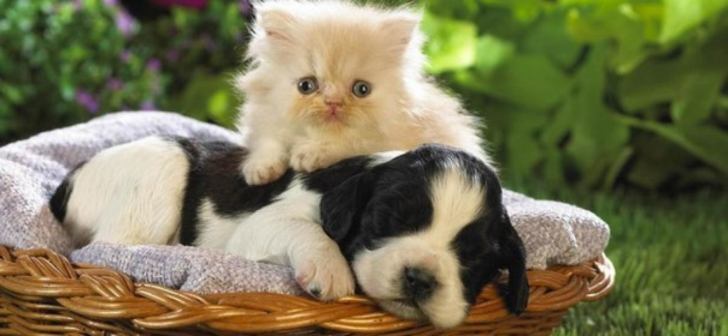 υγεία Συμπτώματα Σκύλος κατοικίδια Γάτα ασθένειες ασθένεια