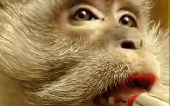 πίθηκος μακιγιάζ