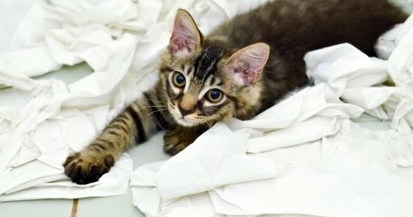 Άτακτο, ζημιάρικο γατάκι; Το βοηθάμε να κόψει 12 κακές συνήθειες