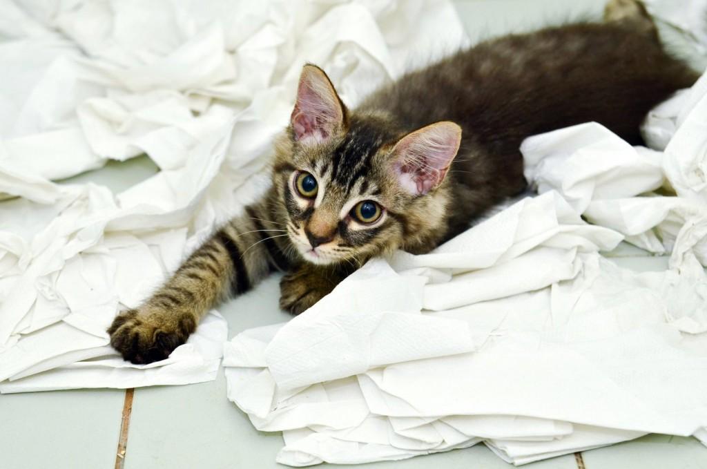 naughty-kitten1-1024x679