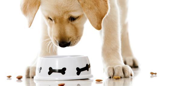 Σκύλος διατροφή