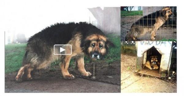 Η ιστορία του πιο κακοποιημένου και παραμελημένου σκύλου στον κόσμο (video)