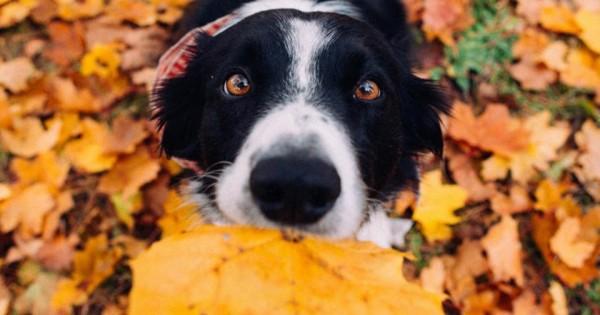 Φωτογραφικό σκύλο-κουίζ – Βρείτε τον Momo!
