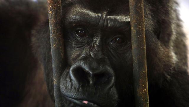 κλουβί ζώα ελευθερία αιχμαλωσία
