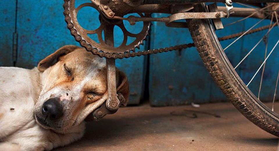 ύπνος Σκύλος