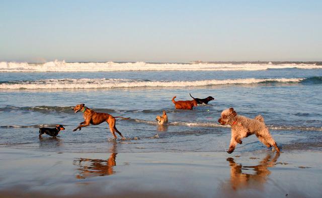 Σκύλος σκυλιά παραλία κολύμπι θάλασσα