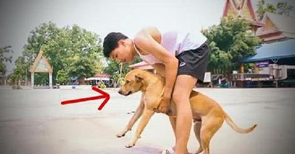 Ταϊλάνδη Σκύλος Bangkok