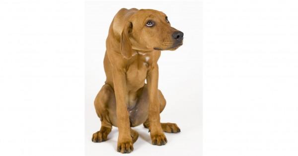 Γλώσσα σώματος: Πώς μας δείχνουν οι σκύλοι ότι φοβούνται
