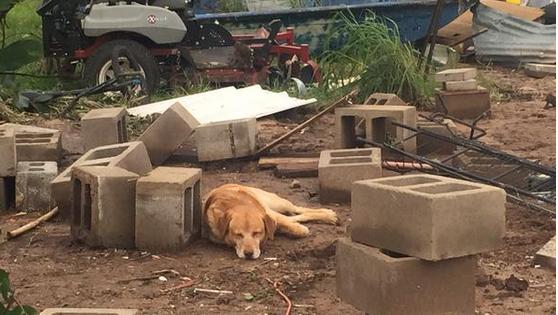 Σκύλος περιμένει στα συντρίμμια την οικογένειά του που σκοτώθηκε από ανεμοστρόβιλο…