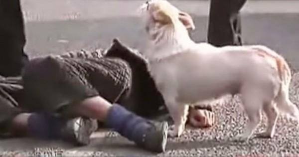 Ο ιδιοκτήτης του έσβησε στη μέση του δρόμου. Η αντίδραση του κουταβιού θα σας κάνει να δακρύσετε… (video)