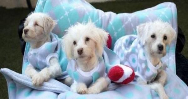 Μοιάζουν με συνηθισμένα σκυλάκια, όμως είναι τρεις μικροί… ήρωες! Δείτε γιατί!