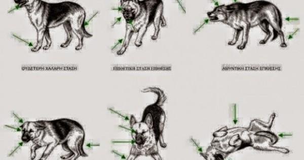 Μάθε τη γλώσσα του σώματος ενός σκύλου!