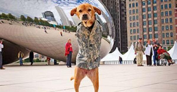 Αυτός ο σκύλος περπατάει στα 2 πόδια. Αυτό όμως δεν είναι το περίεργο της υπόθεσης…
