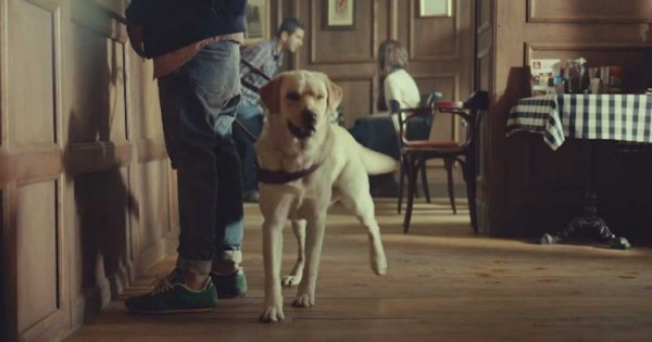 Αυτός ο σκύλος-οδηγός τυφλών ανθρώπων, αφήνει τον ιδιοκτήτη του. Το γιατί, θα σας συγκινήσει