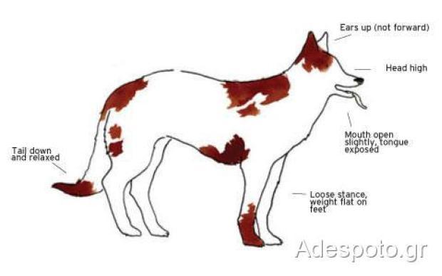 Σκύλος γλώσσα του σώματος
