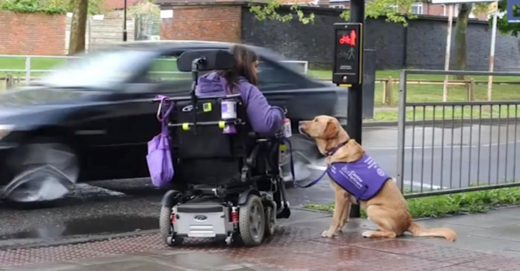 Σκύλος ανάπηρη γυναίκα