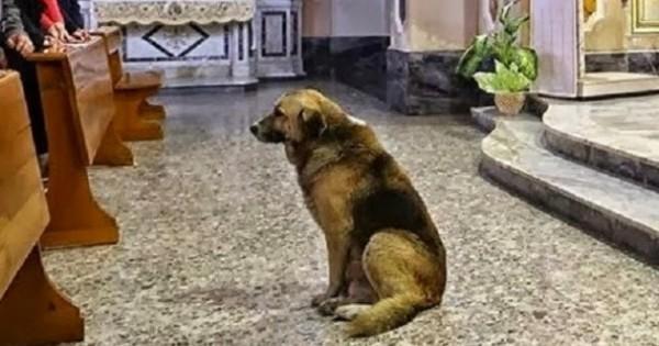 Αυτός ο σκύλος πηγαίνει κάθε μέρα στην εκκλησία! Ο λόγος; Θα σας ραγίσει τη καρδιά…