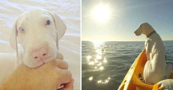 Τυφλό Σκύλος κουτάβι