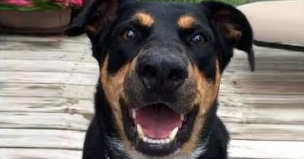 Τι αποκαλύπτει το γαύγισμα ενός σκύλου