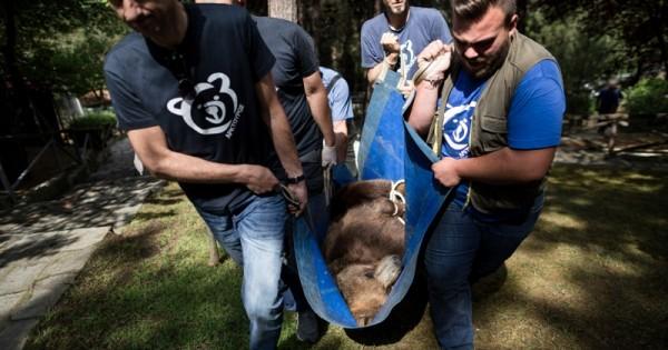 Καρέ-καρέ η μεταφορά λύκων και αρκούδων από τον Ζωολογικό Κήπο Θεσσαλονίκης στο Νυμφαίο και τις Αγραπιδιές Φλώρινας
