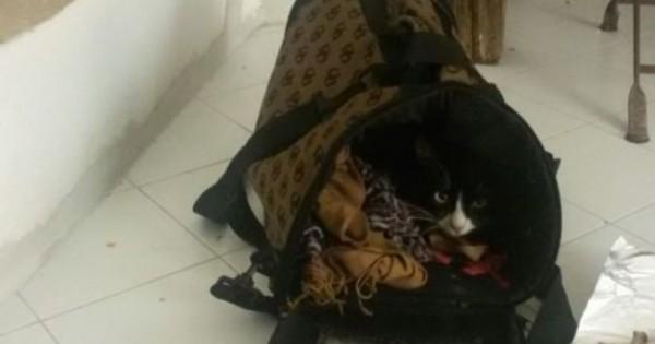 Γνωρίστε τη Λόλα, τη γάτα που διέσχισε έρημο και θάλασσα για να φτάσει στην Ιταλία