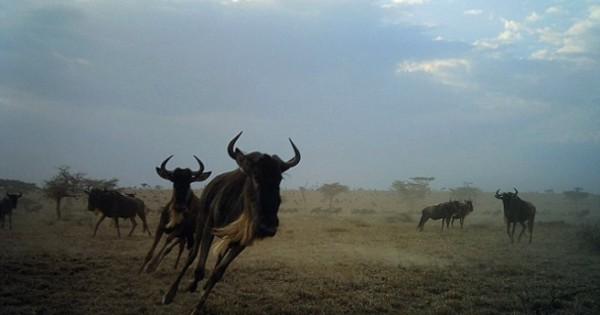 Η άγρια ζωή μπροστά στο φακό (Εικόνες)