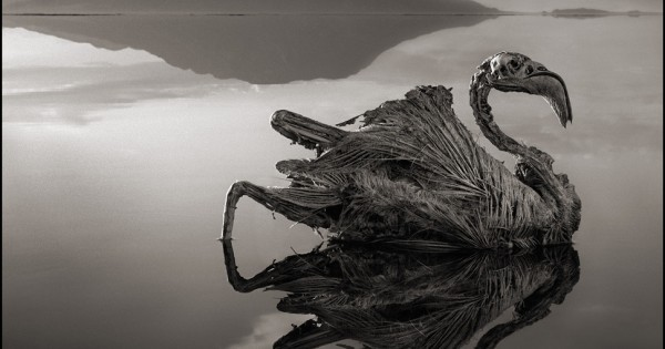 Φονική λίμνη μετατρέπει τα ζώα σε αγάλματα (εικόνες)