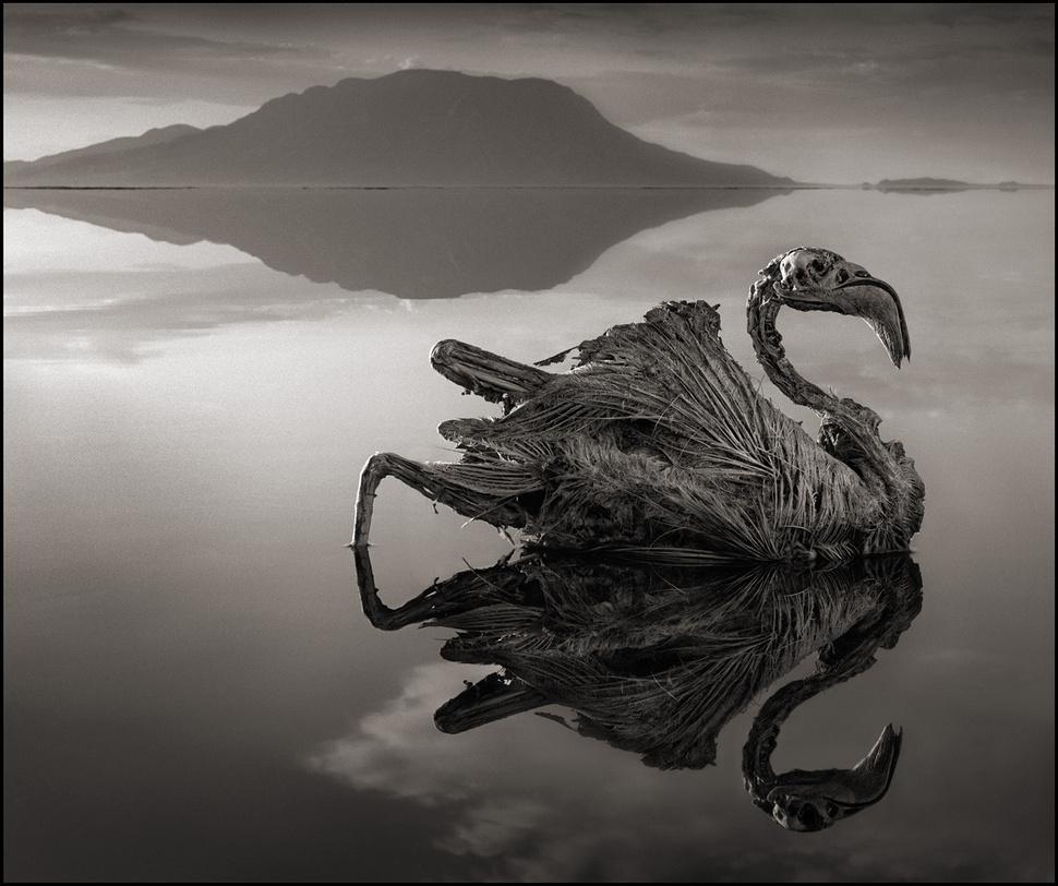 λίμνη ζώα αγάλματα