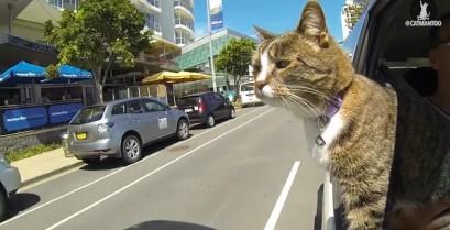 Didga: Η απίθανη γάτα (Βίντεο)