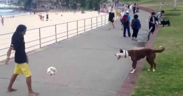 Ο σκύλος ξέρει πολλή μπάλα (Βίντεο)