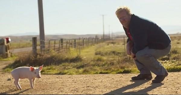 Βρήκε ένα χαμένο γουρουνάκι και προσπάθησε να βρει τον ιδιοκτήτη του. Όταν είδε ποιος ήταν; Tou ράγισε την καρδία… (Βίντεο)