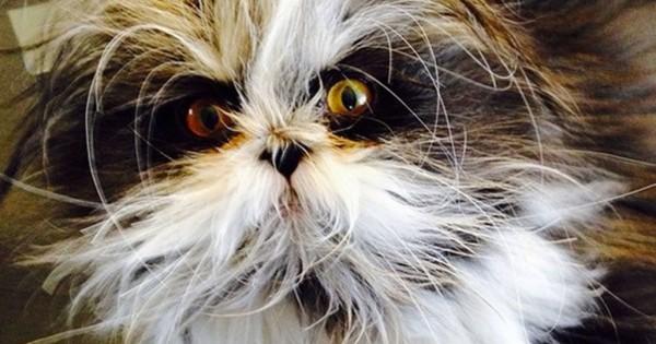 Αυτή η γάτα με το «σύνδρομο του λυκάνθρωπου» είναι κάπως τρομακτική όμως παράλληλα ξεχωριστή και αξιολάτρευτη! (Εικόνες)