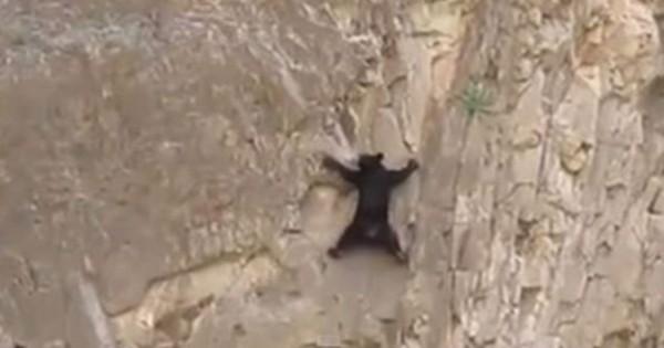 Αρκούδες κάνουν ορειβασία σε χαράδρα και τρελαίνουν το διαδίκτυο! (Βίντεο)