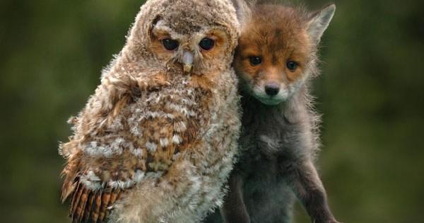 Γιατί τα ζώα κάνουν φίλους όπως και οι άνθρωποι; (Εικόνες)