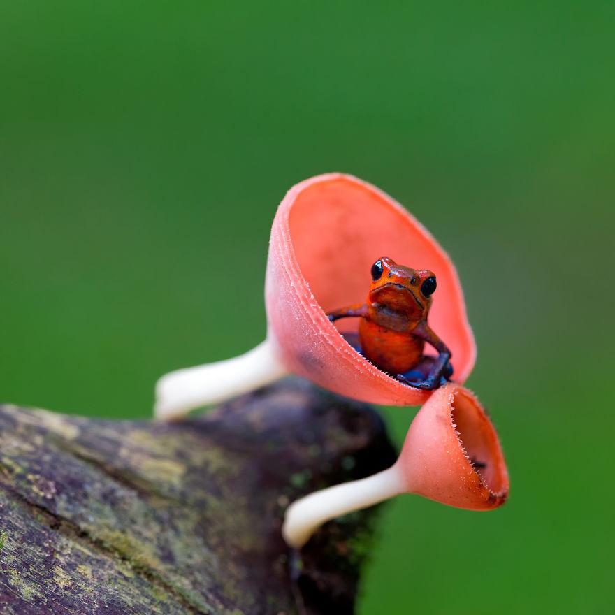 βατραχάκια