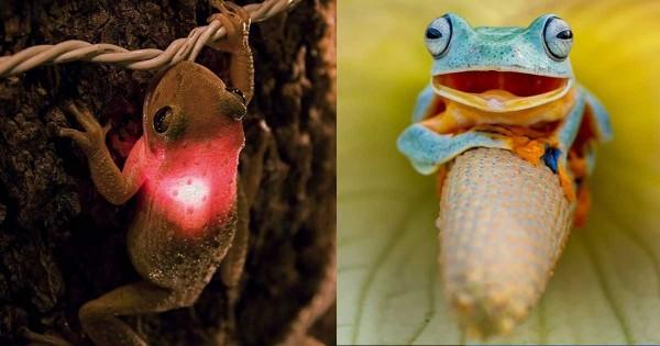 20 από τα πιο απίθανα βατραχάκια του κόσμου! (Εικόνες)