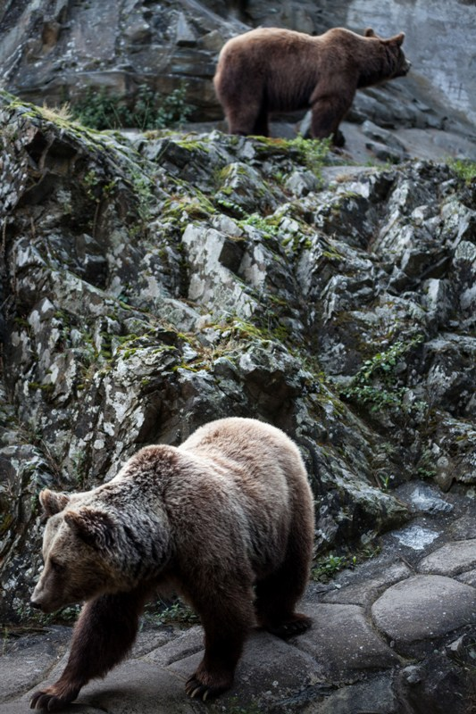 Φλώρινα Νυμφαίο Φλώρινας λύκοι Ζωολογικός Κήπος Θεσσαλονίκης Αρκτούρος αρκούδες