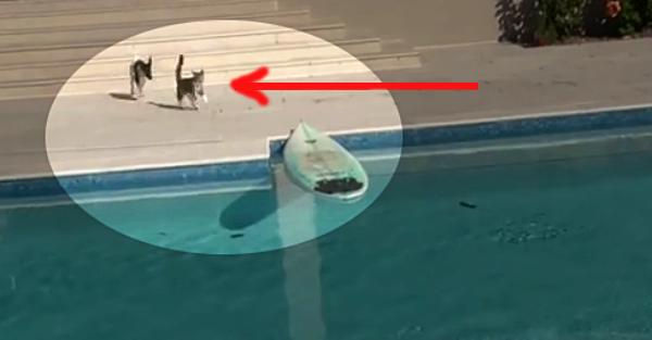 Δείτε το απίστευτο κόλπο της γάτας για να ξεφύγει από τον σκύλο! (βιντεο)