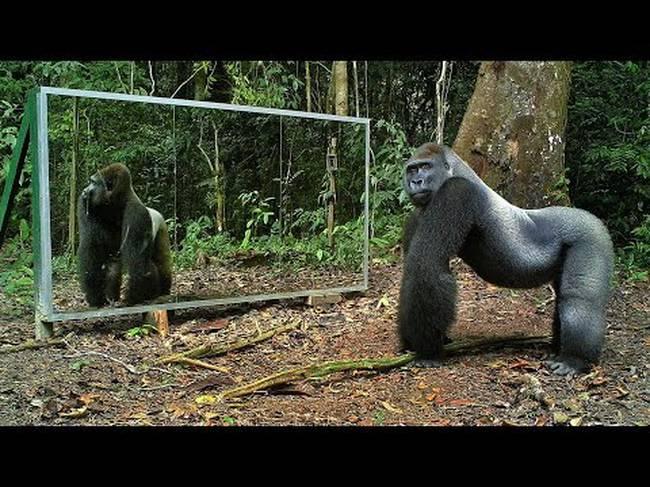 Καθρέφτης ζούγκλα άγρια ζώα