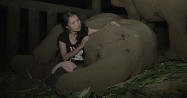 Έχει έναν μοναδικό τρόπο για να κοιμίζει τους ελέφαντες! Περιμένετε μέχρι να δείτε το βίντεο