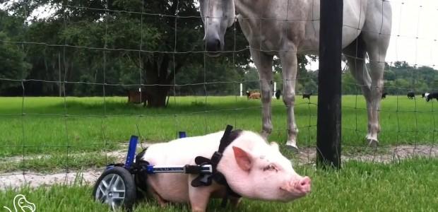 ιατρική ζώα ανάπηρα ζώα