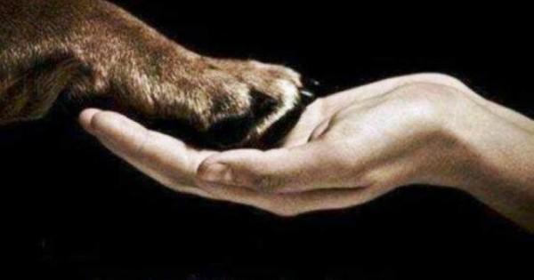 Πέντε τρόποι που ο σκύλος σας λέει σ' αγαπώ!