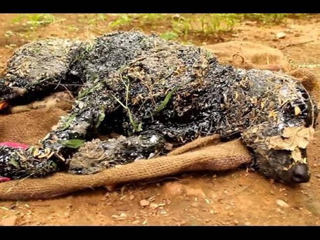 Σκύλος πίσσα Ινδία διάσωση