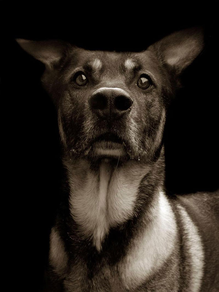 Σκύλος πορτραίτα αδέσποτα σκυλιά Αδέσποτα
