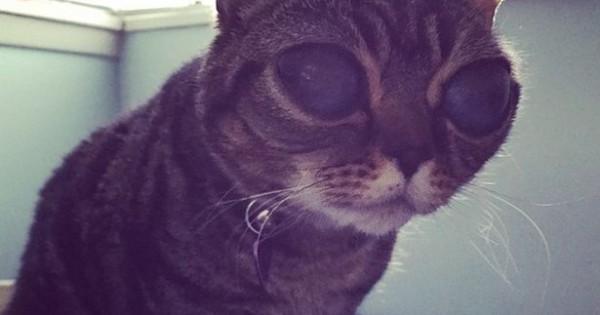 Matilda η γάτα με τα περίεργα μάτια! Δείτε την ιστορία της!
