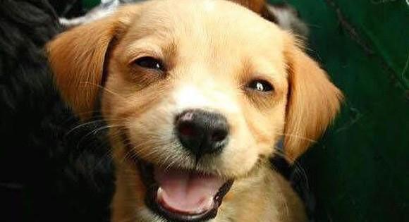 Μήπως ο σκύλος σας χαμογελάει;