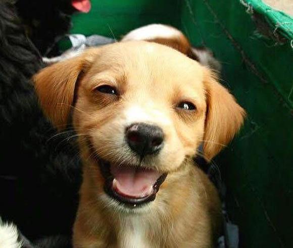 χαμόγελο Σκύλος
