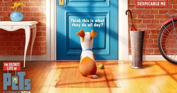 Κατοικίδια: Αναρωτιέστε τι κάνουν όταν φεύγετε από το σπίτι; Δείτε το video!