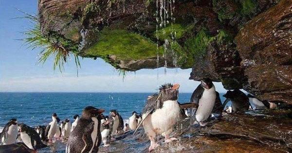Άγρια ζώα απολαμβάνουν ένα… ντουζάκι στη φύση! (εικόνες)